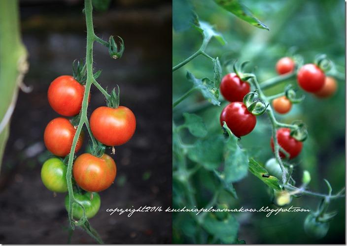 Pomidory mojej mamy i tarta z pomidorami  w wersji klasycznej i bezglutenowej8