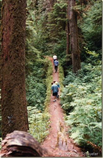 nature walk oly nat park trail across ravine on downed doug fir