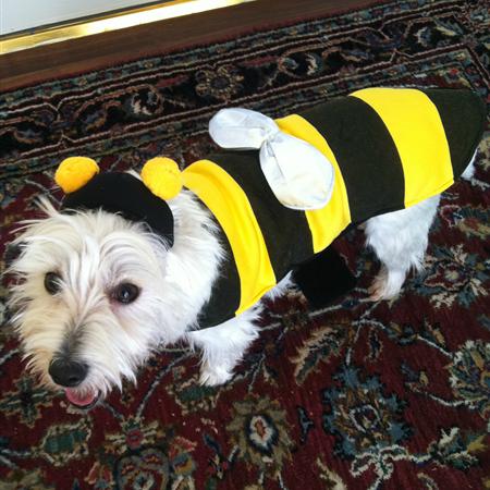 Bumblebee  lookforsilverlining.blogspot.com