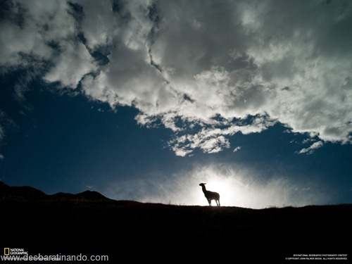 wallpapers national geographic desbaratinando (11)