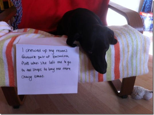 dog-shaming-bad-4