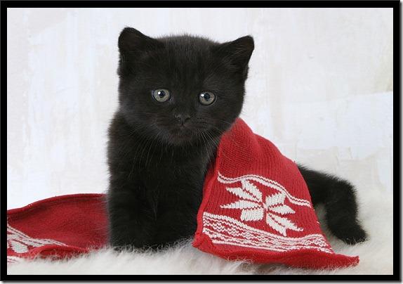 gatos gorro papá noel (24)