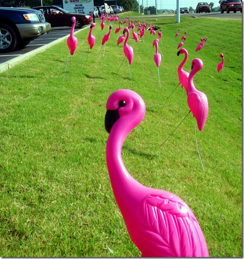 flamingosonstadium