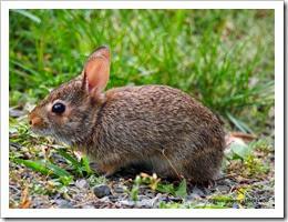 31-bunnies and birds 2014-06-25 090
