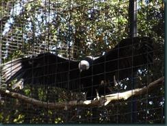 Fresno Zoo 026
