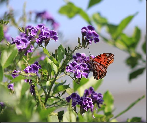 Retama Butterfly 20132