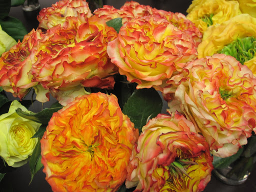 I love the multi-colored roses that are found throughout the shop. These do not have a specific name yet, for now they are called 