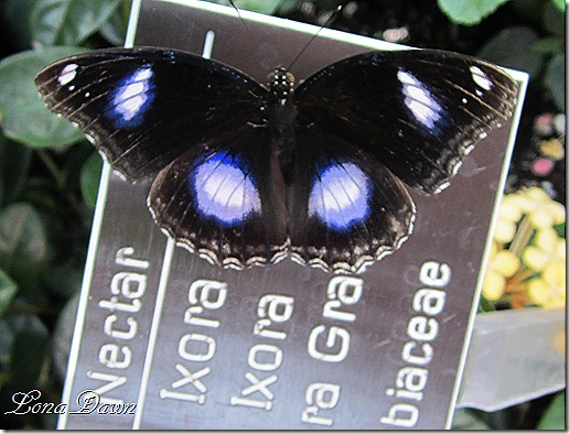 LG_Great_Eggfly