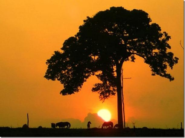 beautiful-amazon-rain-forest-15