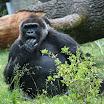 zoo_kolmarden_8879.jpg