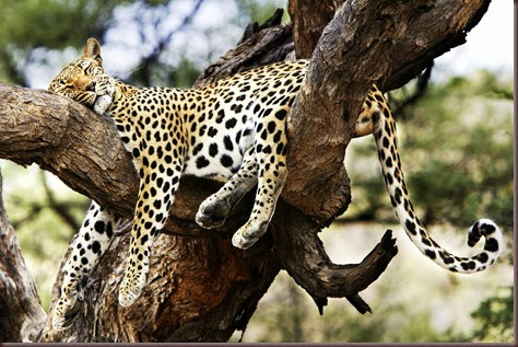 Amazing Animal Pictures Cheetah (13)
