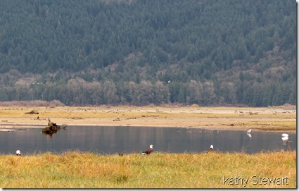Eagles, Swan and Heron