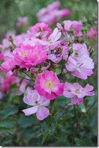 Serena's Flowers 3