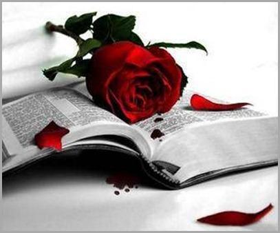libro-rosa