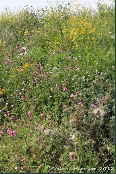 17-Wild-Flowers