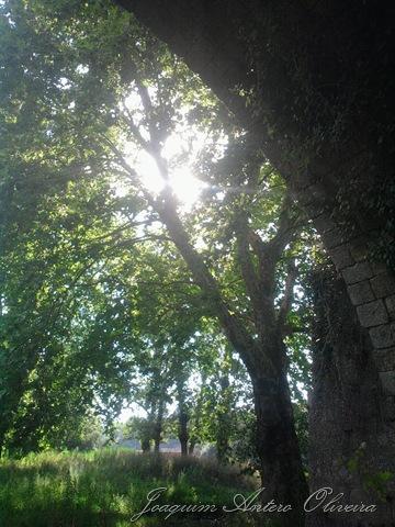 Foto0243