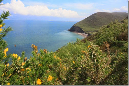 ring-of-kerry-bus-gorse-ocean