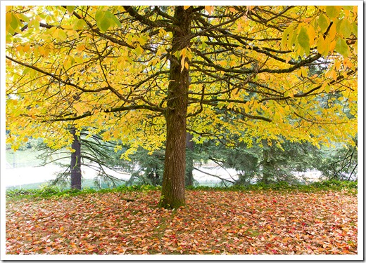 111104_wash_park_tree