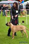 20100513-Bullmastiff-Clubmatch_30900.jpg