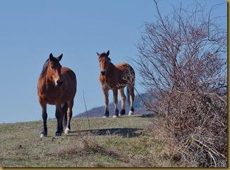 cavalli alle lastre