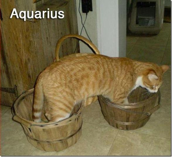 cats-signs-zodiac-4
