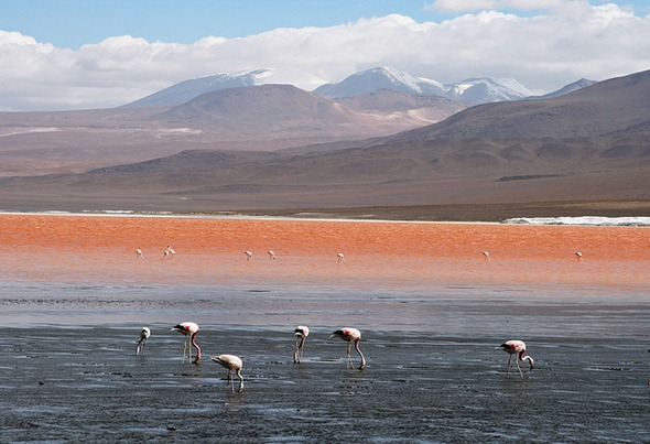 Laguna Colorada, Bolivia 01