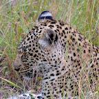 Leopard im Sabi Sand Wildreservat, Südafrika © Foto: Jens Döring | Outback Africa Erlebnisreisen