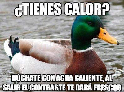 consejos del pato (4)