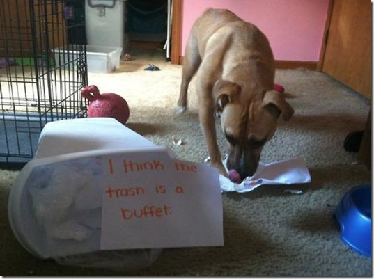 dog-shaming-bad-22