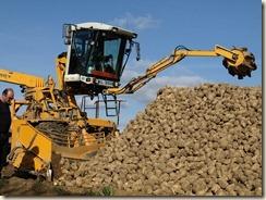 Suikerbieten worden op vrachtwagens geladen: ca. 7 minuten om een dertigtonner te laden