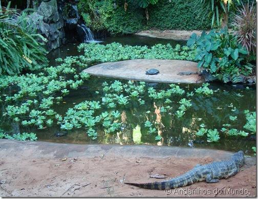 Jacaré Tartaruga Parque das Aves Foz do Iguaçu BlogTurFoz