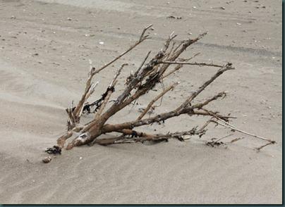 39-driftwood