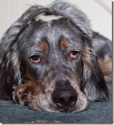 glum dog