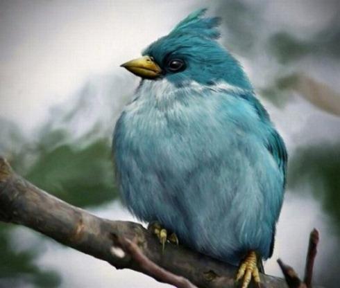 Real-Life-Angry-Birds-002