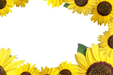 sunflower-pattern