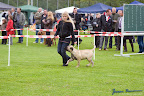 20100513-Bullmastiff-Clubmatch_30892.jpg