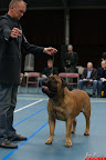 20130510-Bullmastiff-Worldcup-0222.jpg