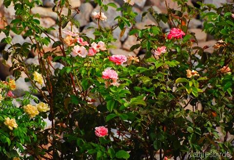 8. roses-kab