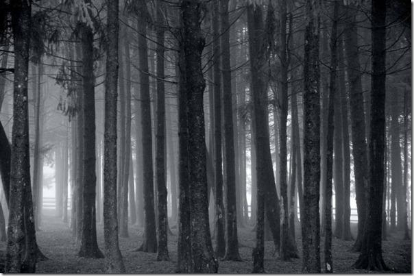 Florestas sombrias (10)