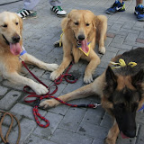 Pet Express Doggie Run 2012 Philippines. Jpg (239).JPG