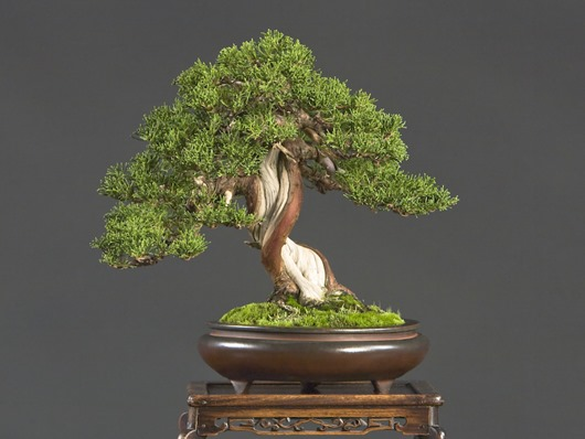 Bay Island Bonsai 2008