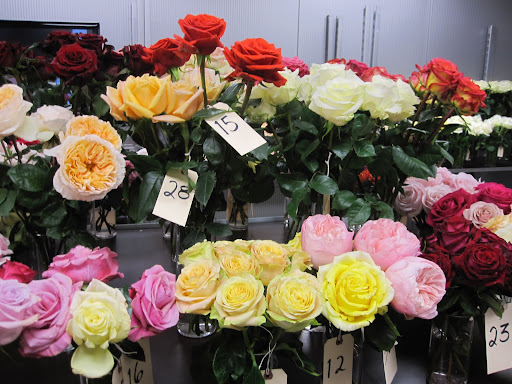 These roses on the back table are numbered and you are able to rate the roses and tell the rose distributors what you think about their flowers.
