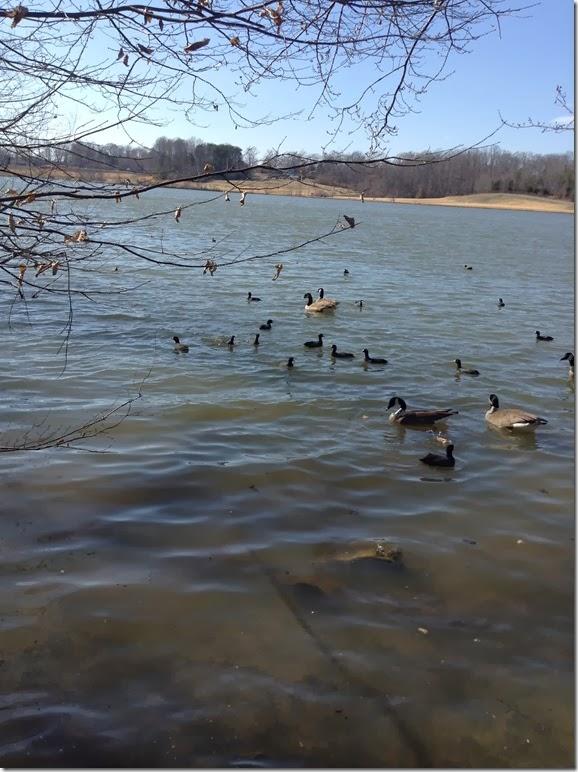 Ducks Geese Cane Creek 3 10 14