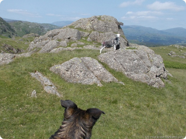 brackeny crag stand-off (bruno won the staring competition)