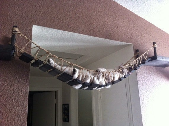 Indiana Jones Cat Bridge by CatastrophiCreations