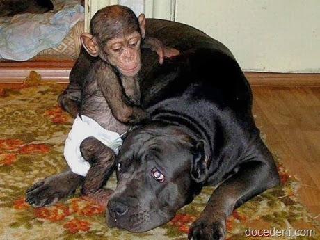 macaco e cadela5