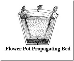 flowerpotpropagation