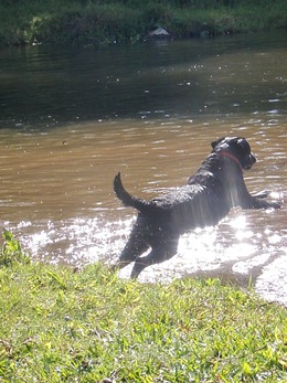 Dogs Trekking 4 (60)
