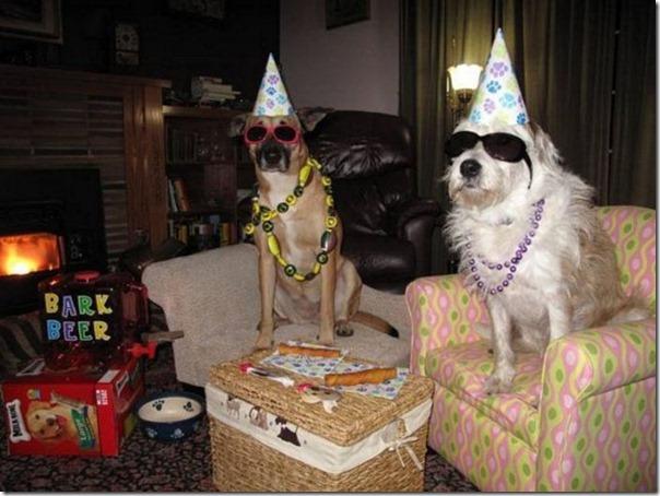 Festa boa pra cachorro