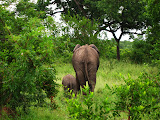 South Africa - 055.JPG